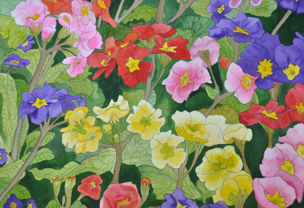 Prim Roses 2 © Susan Ticken