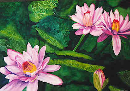Waterlilies © Susan Ticken