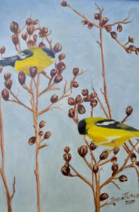 Golden Finches